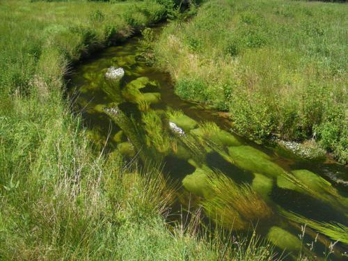 Wasser- und Bodenverband Uelzen - Projekt Gewässerallianz Niedersachsen - flutende-Vegetation